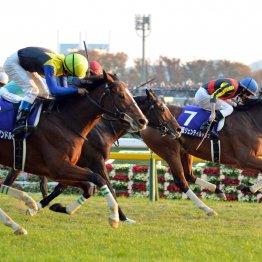 【ジャパンC】近年は牝馬が大活躍