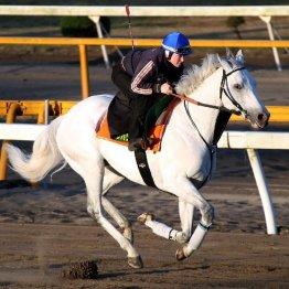 【ジャパンC】フランスから参戦ウェイトゥパリスは最も〝映える〟馬