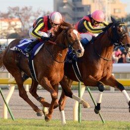 【ジャパンC】世界でも珍しい3冠馬同士の対戦