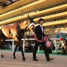 【ジャパンC】世界初の3冠馬3頭参戦で売り上げはダービー超えも3連単、3連複の配当は…
