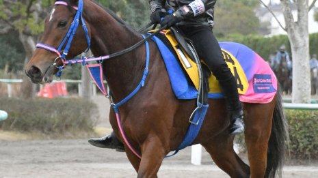 【ステイヤーズS】ヒュミドールが小手川厩舎に初重賞を