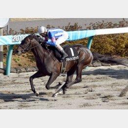 この舞台で韓国馬事会杯勝ち