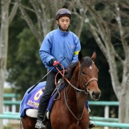 【チャンピオンズC】出走全馬の特選情報