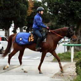 """スワーヴゾロ「""""目利き""""のよさで知られる馬主が動きのよさ評価」"""