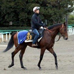 ディオスバリエンテ「テッペンのGⅠを狙える馬です」