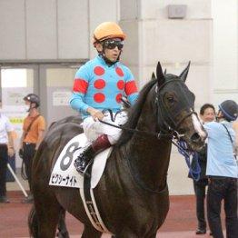 【シンザン記念】ピクシーナイト、新馬勝ちの中京で馬券に