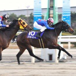 地方競馬を席巻する種牡馬サウスヴィグラス 重賞勝ち第1号はこの船橋記念09年スパロービート