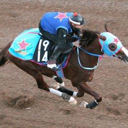 【京成杯】タイソウ新馬勝ちから上積み十分