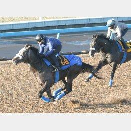 馬なりでも軽快な動きのプラチナトレジャー