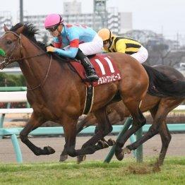 【アメリカJCC】クラシック路線で活躍した4歳馬が中心