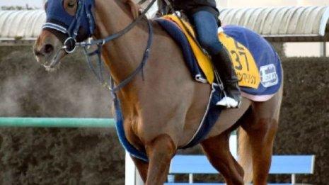 【アメリカJCC】出走馬の特選情報