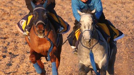【アメリカJCC】ウインマリリン馬なりで1F12秒1