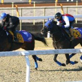 【市川の日曜競馬コラム・アメリカJCC】