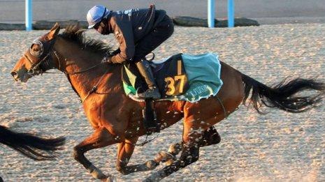 ヴァルガス「この馬の評価が高く2代続けてモーリスを配合した」