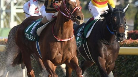 【根岸S】チャンピオンズC組で距離短縮がいい馬は
