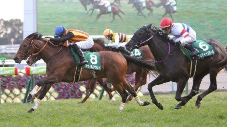 【シルクロードS】高松宮記念馬モズスーパーフレアが出走 本番と同じ舞台もカギは馬場とハンデ