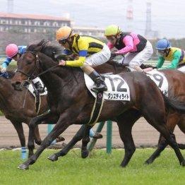 【市川の日曜競馬コラム・京都記念】