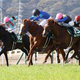 【小倉大賞典】引退ヤリ炸裂 西浦厩舎のテリトーリアル鼻差勝ち