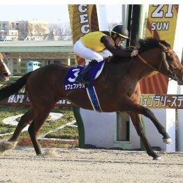 【フェブラリーS】 新ダート王襲名カフェファラオは海外でこそか  サウジで活躍した馬との共通点とは