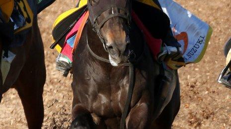 【中山記念】鈴木伸師が力を込める7歳馬ウインイクシード