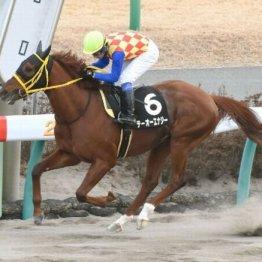 【橘の土曜競馬コラム・仁川S】