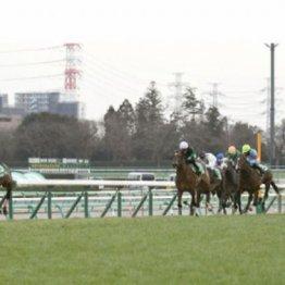 【市川の日曜競馬コラム・弥生賞ディープインパクト記念】