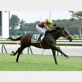 新潟で新馬勝ち