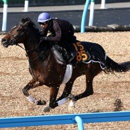 ロードトゥフェイム「弥生賞馬タイトルホルダーと同等です」