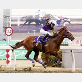 10年ぶりに川崎記念で地方馬がV(カジノフォンテン)