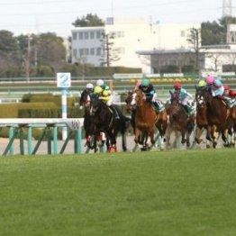 【武田の土曜競馬コラム・阪神牝馬S】