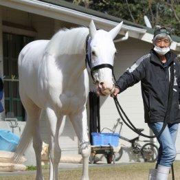 【桜花賞】出走全馬の特選情報