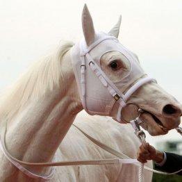 【桜花賞】ソングライン大阪杯②着馬の鞍上でここも!
