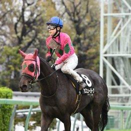【播磨の土曜競馬コラム・福島牝馬S】