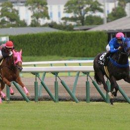 【新谷の土曜競馬コラム・京橋S】