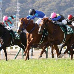【勝羽の土曜競馬コラム・福島牝馬S】