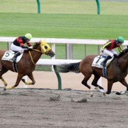 【飯島の土曜競馬コラム・春光S】