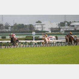 阪神大賞典を圧勝した馬の成績は……