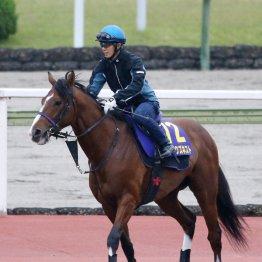 【NHKマイルC】出走全馬の特選情報