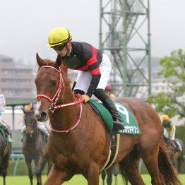 【新谷の日曜競馬コラム・NHKマイルC】