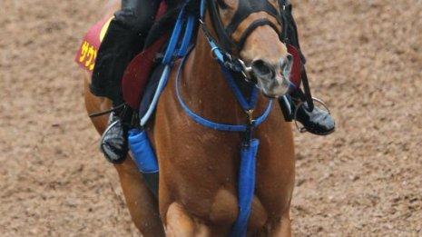 【ヴィクトリアマイル】出走馬の特選情報