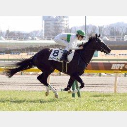 東京で新馬勝ち