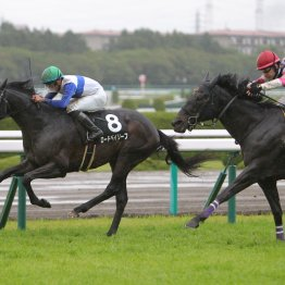 【レスキュー隊の日曜競馬コラム・中京12R】