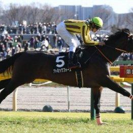 【大谷の土曜競馬コラム・メイS】