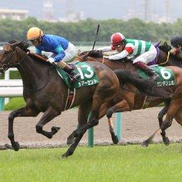 【マーメイドS】ここで初タイトルを狙う馬が多数参戦
