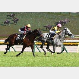 土曜東京メインのジューンSは5歳馬シルヴァーソニックが勝利