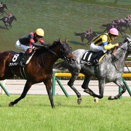 3勝クラスは5歳馬が、1勝クラスは3歳馬が圧倒