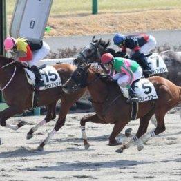 【マリナの日曜競馬コラム・東京1R】