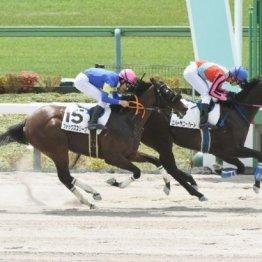 【レスキュー隊の日曜競馬コラム・東京12R】