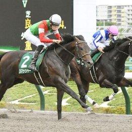 【ユニコーンS】西の牝馬重賞よりも大荒れだが、①②着馬スマッシャー、サヴァの強さは本物