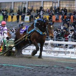 〈特別編〉ばんえい競馬の大スター ホクショウマサルの死に思うこと(1)
